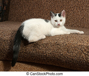 White kitten with black spots lying on couch