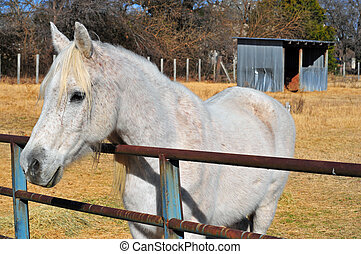 white ló, és, elhullat