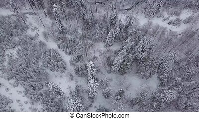 White lands with woods in snow - View from drone of tranquil...