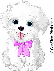 White lap-dog - Cute white lap-dog puppy posing with pink ...