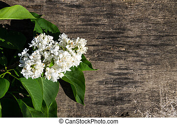 White lilac flowers on wooden background with copy space