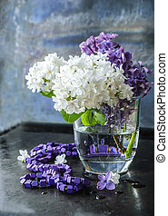 White lilac on a dark background, close-up