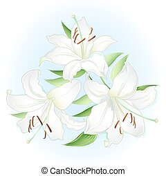 White lilies bouquet; isolated on white background (vector...