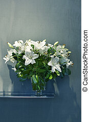 White lilies in a flower vase with blue background