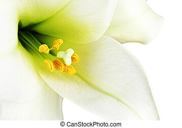 Close-up of the inside of a white lilly