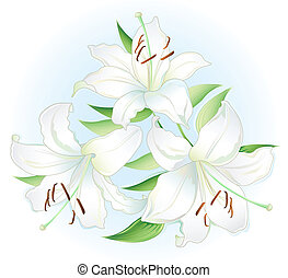 Three white Lillies on light background