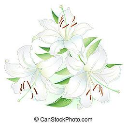 Three white Lillies on white background