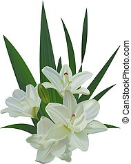 White lily bouquet flowers isolated