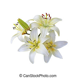 White Lily branch - Fresh white lily flowers branch isolated...