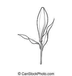 White lily flower bud with stem and leaves, side view