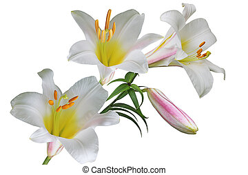 White Lily Flower - Multi color lily flower bouquet isolated...