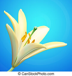 White lily flower vector illustration