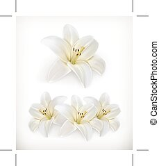White lily icons
