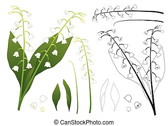 White Lily of the Valley Outline. isolated on White...