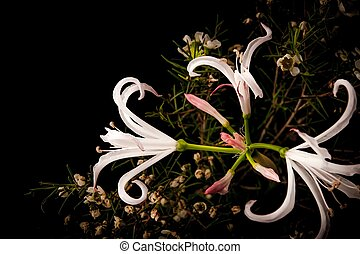 White lily with little flowers on the black background