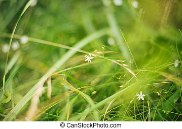 White little flowers in green grass