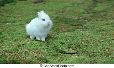 White Little Rabbit on Green Moss sitting