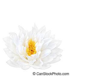 White Lotus Beauty