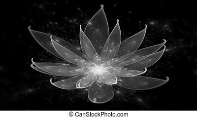 White Lotus Water Lily, Enlightenme