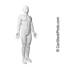 White male body - 3d rendered illustration - white male body
