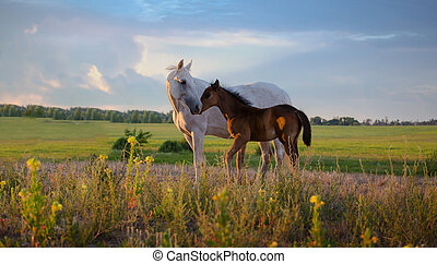white mare with red foal