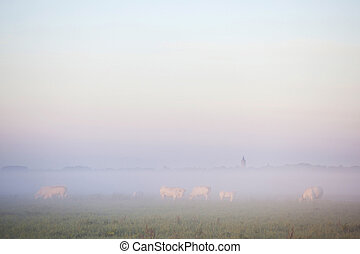 White Meat Cows In Eempolder At Sunset