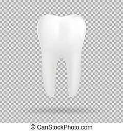 White molar tooth. Graphic design element for dentist...