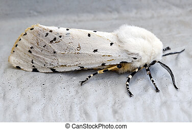 White Moth - Macro image of white moth on side of house.
