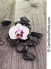 White Moth orchid and black stones