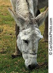 White Mule in a Meadow
