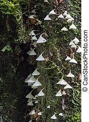 white mushrooms hanging on a tree
