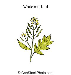 White mustard Sinapis alba