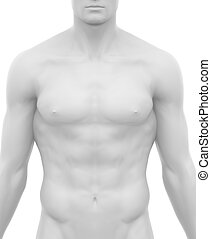White naked male isolated anterior view in anatomical postition