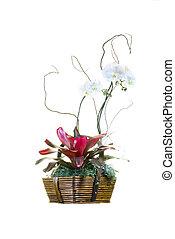 White Orchid Basket Arrangement