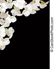 White Orchid Branch.