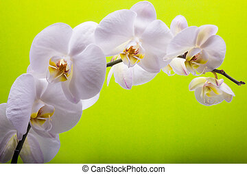 White orchid isolated on bright color background. Beautiful...
