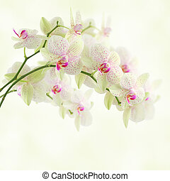 White orchid on a light background