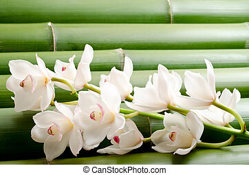 White orchid flowers on a tightly arranged large bamboo background