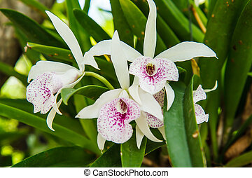 White orchid on tree