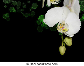 White orchid with coloured bokeh corner