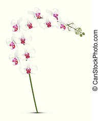 white orchids branch