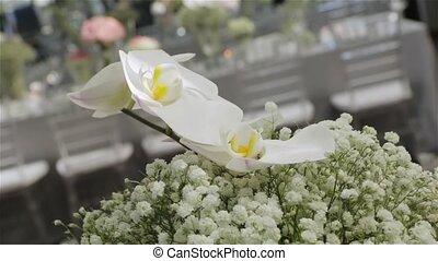 White orchids flowers floristics interior design white flowers luxury expensive decoration set banquet wedding table camera movement