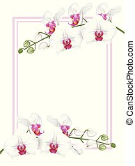 white orchids with frame