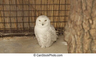 White Owl in a Cage - A white owl sits behind a tree in a...