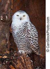 White owl sitting on stump in zoo