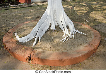 white painted tree roots in  park