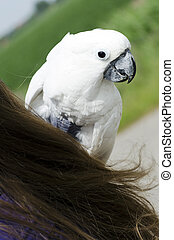 White parrot closeup on the shoulder