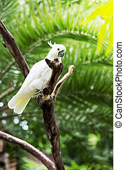 white parrot of a cockatoo sits on a branch