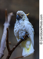 white parrot on a branch