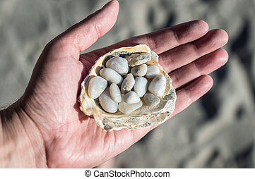 White pebbles in the shell on a hand